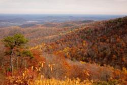Shenandoah foliage